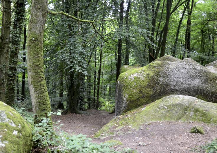 Le bois du Tay dans les Coëvrons