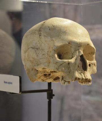 Musée de préhistoire dans la vallée des grottes de Saulges dans les coëvrons